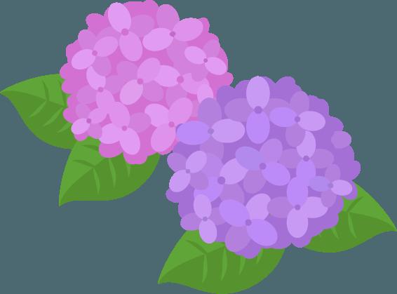 ピンクと紫の紫陽花のイラスト Illaletイラレット