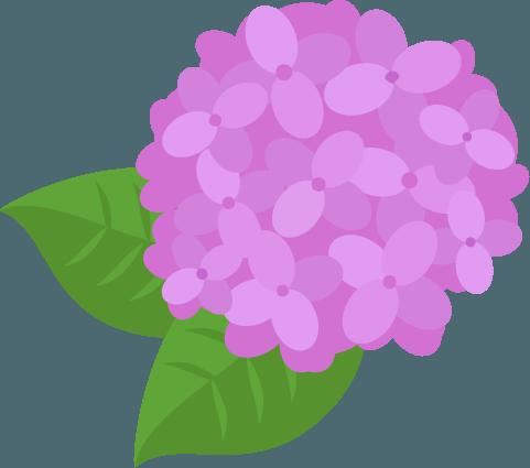 ピンクの紫陽花のイラスト Illaletイラレット