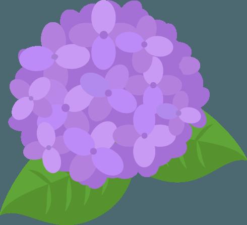紫の紫陽花のイラスト Illaletイラレット