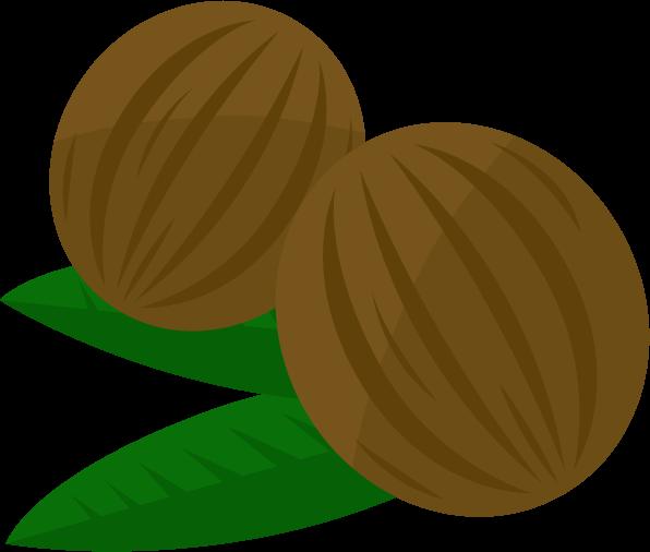 ココナッツのイラスト2