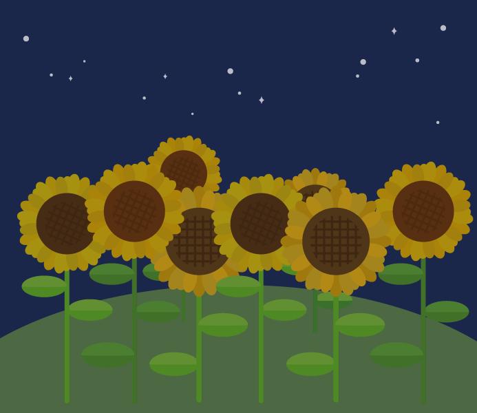ひまわり畑のイラスト(夜)