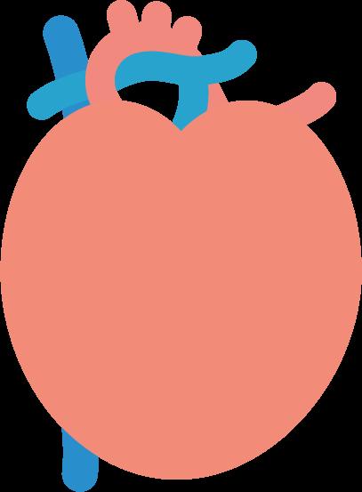 心臓のイラスト(健康)1