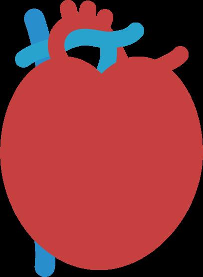 心臓のイラスト(炎症)1