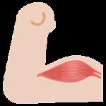 力こぶの筋肉のイラスト1