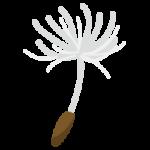たんぽぽの綿帽子のイラスト3