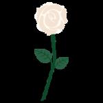 一輪の白いバラのイラスト