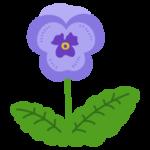 紫のパンジーのイラスト