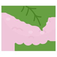 道明寺の桜餅のイラスト