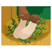 松茸のイラスト3