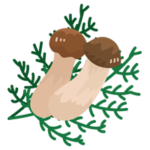 松茸のイラスト4