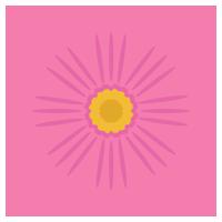 濃いピンク色のコスモスの花のイラスト