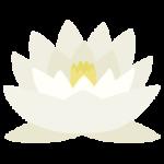 白色の睡蓮(スイレン)の花のイラスト1