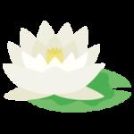 白色の睡蓮(スイレン)の花のイラスト2