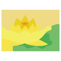 黄色の睡蓮(スイレン)の花のイラスト2