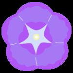 紫の朝顔のアップのイラスト