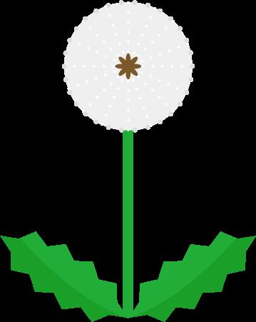 たんぽぽの綿帽子のイラスト1