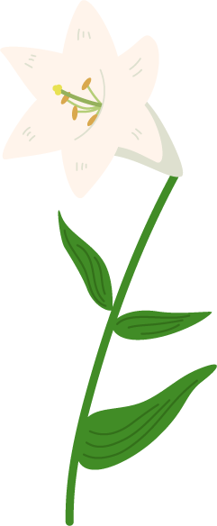 白い百合のイラスト