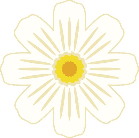 白色のコスモスの花のイラスト