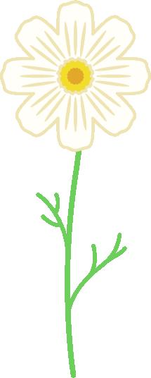 一本の白色のコスモスのイラスト