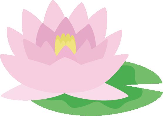ピンク色の睡蓮(スイレン)の花のイラスト2