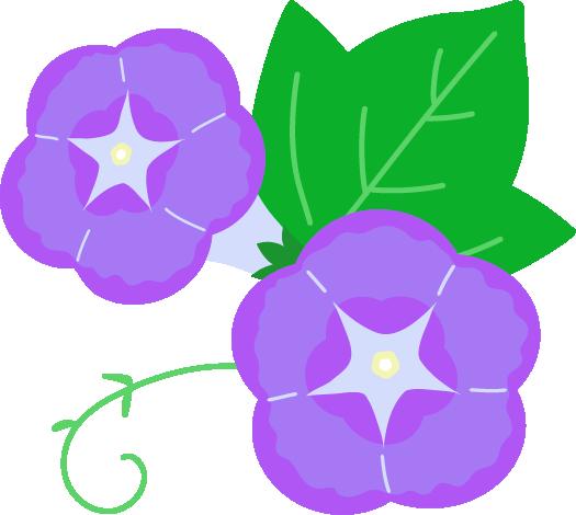 紫の朝顔のアップのイラスト2