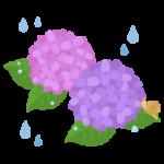 ピンクと紫の紫陽花とカタツムリのイラスト